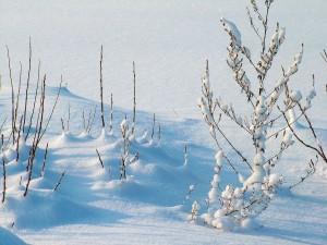 zima snieg